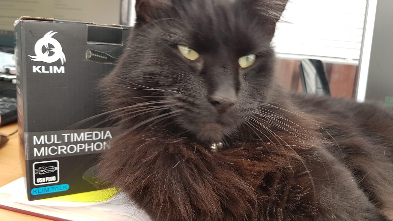 Bazinga the cat with Klim microphone